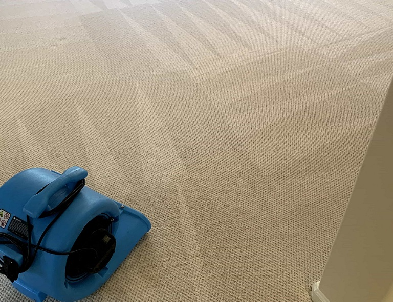 Carpet Cleaning – Century Steam Cleaning